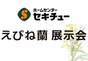 えびね蘭 展示会のお知らせ
