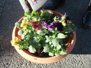 12月6日(土)「楽天いどうとしょかん」の巡回と 「お花の寄せ植え教室」開催のお知らせ
